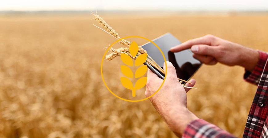 Finger wischt auf Tablet im Hintergrung Getreidefeld